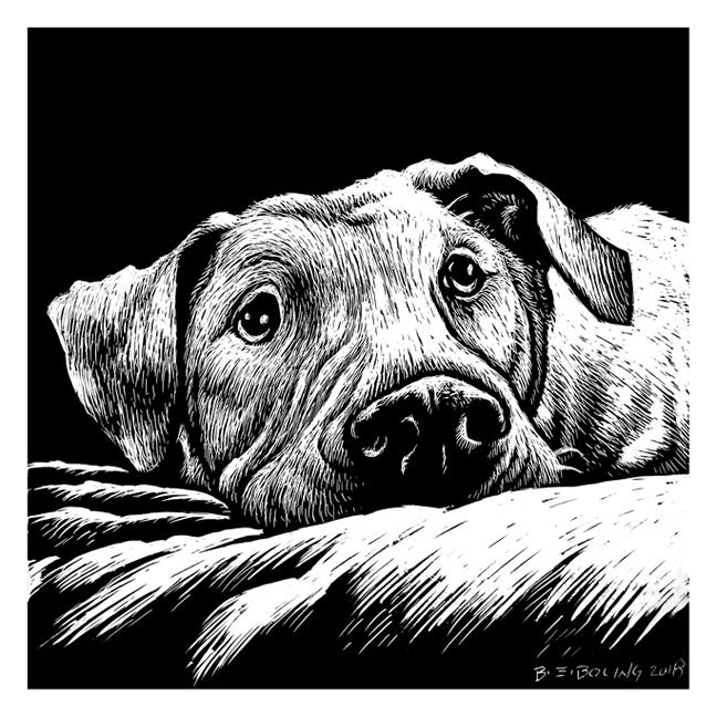 Pet portrait 2